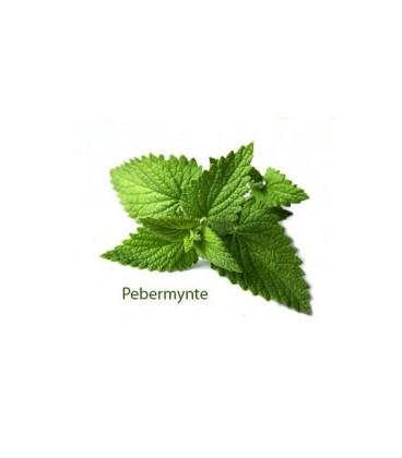 Aroma smag Pebermynte